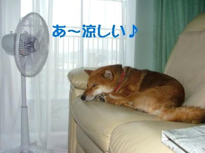 暑い日はコレに限るね♪