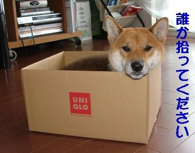箱入り犬♪
