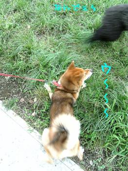へたれ犬(;´Д`)