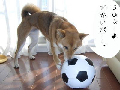 でかいボールだね♪
