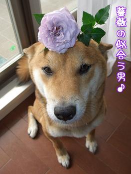 薔薇の似合う男
