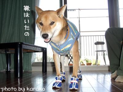 犬は靴が四足必要なんだよ