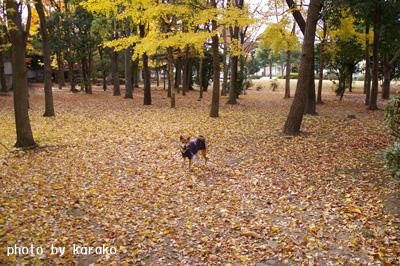 小柳公園です
