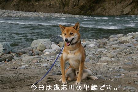 道志川の平蔵だっ