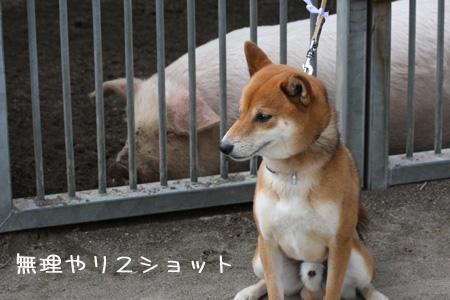 withでっかい豚さん