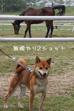 withお馬さん