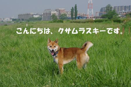 草むらが好きです。