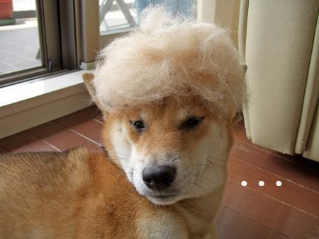 アフロ犬?