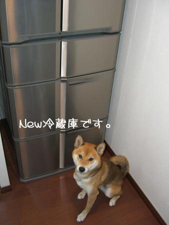 冷蔵庫とボク