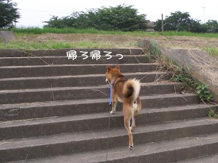 かえりまひょ
