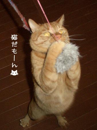 ネコなんだもん