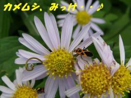 ☆カメムシ☆いたっ・・!