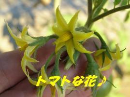 トマトの黄色い花