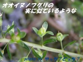青い実・・♪