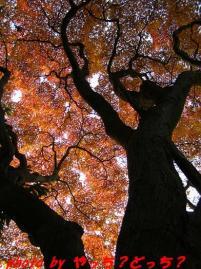木陰から、楽しむ・・♪