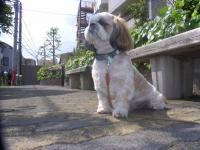 2009-4-22hoikuen2.jpg