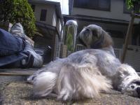 2009-4-22hoikuen4.jpg