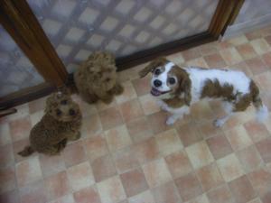 2009-5-22hotel2.jpg