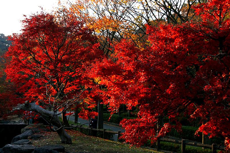 071202横須賀市営公園墓地8