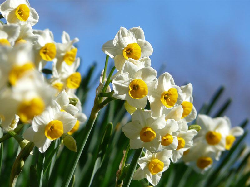 071230花の国3