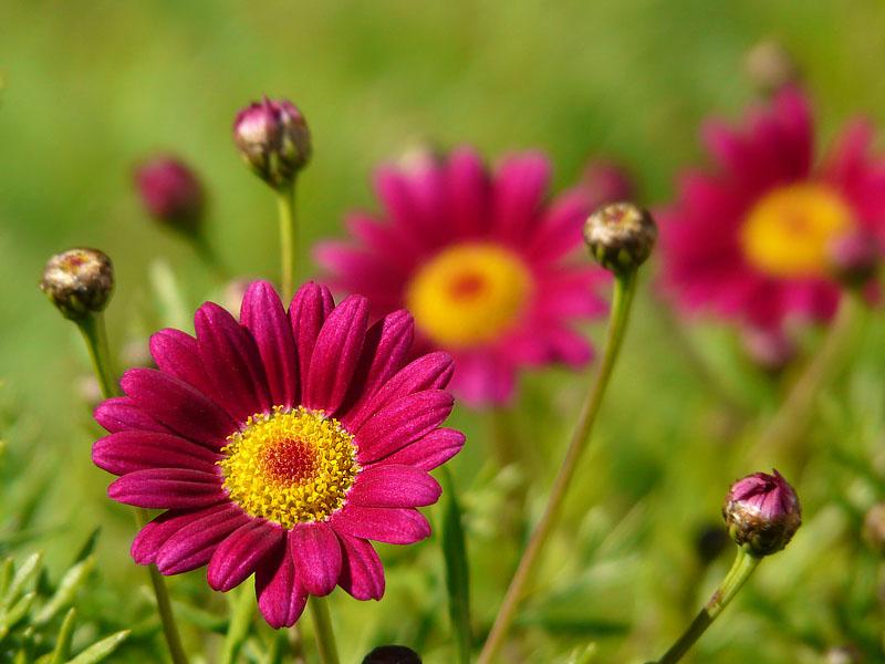 071230花の国5