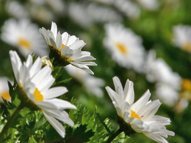 071230花の国6