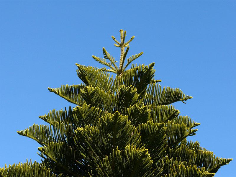 080117常緑樹2