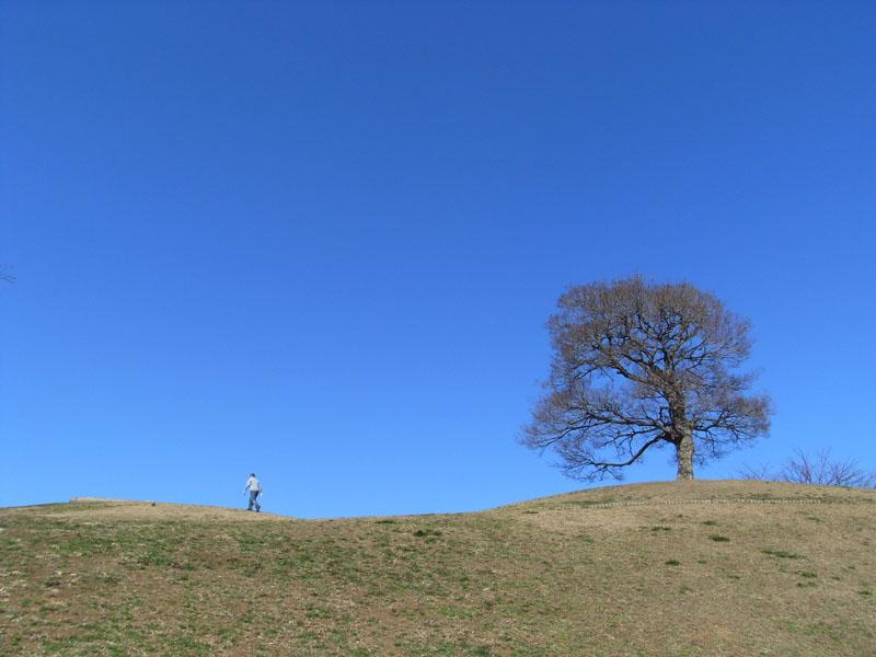 080201今日の青空と水仙1