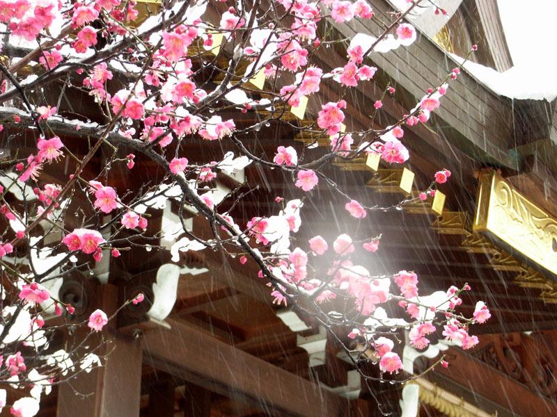 080203雪と紅梅@天神社4