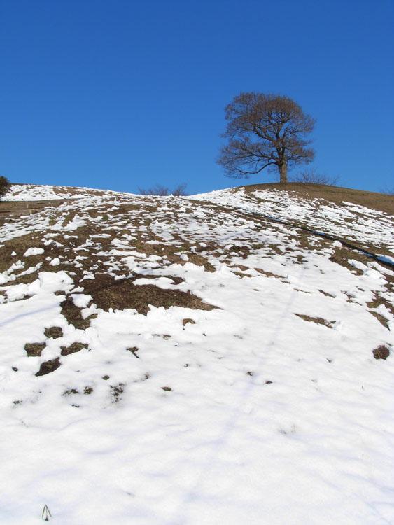 080204雪の榎の丘3