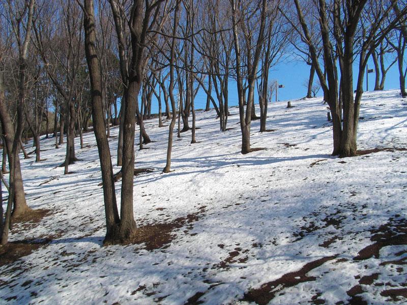 080204雪の榎の丘4