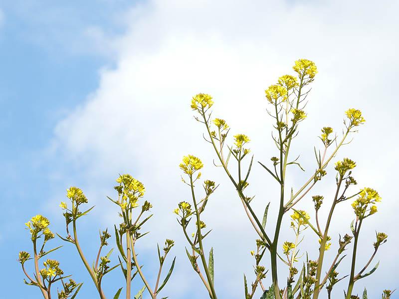 080217三浦の花達2