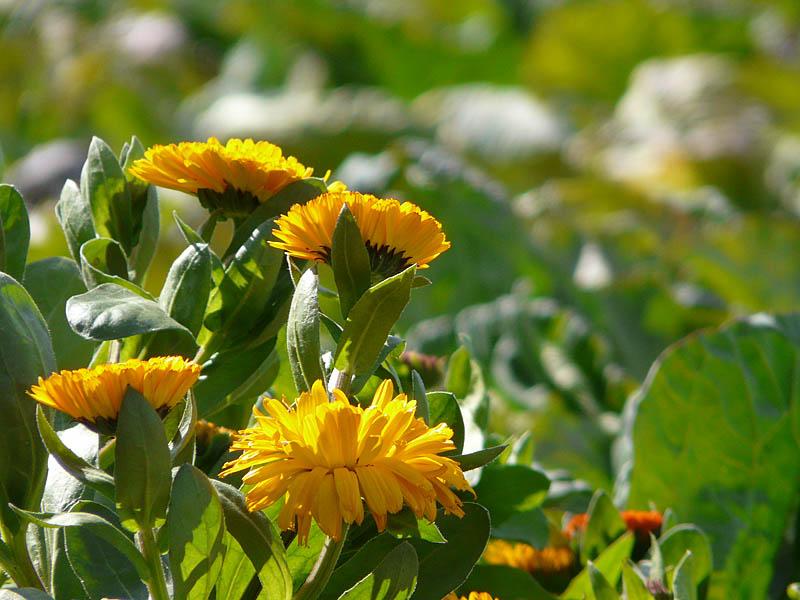 080217三浦の花達5