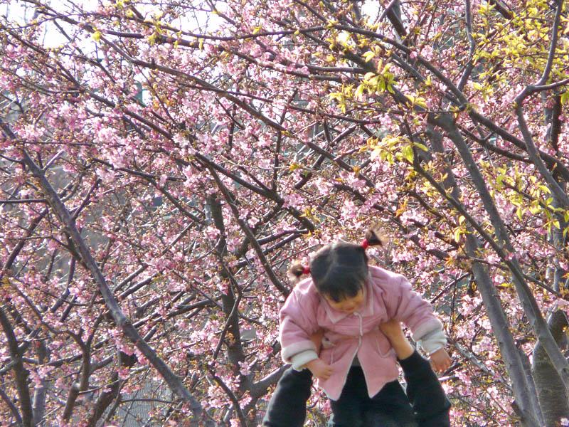 080302桜娘1