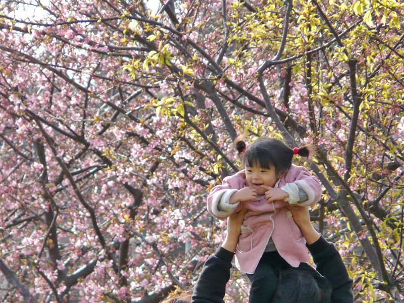 080302桜娘2