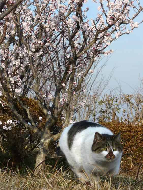 080309花の国梅5