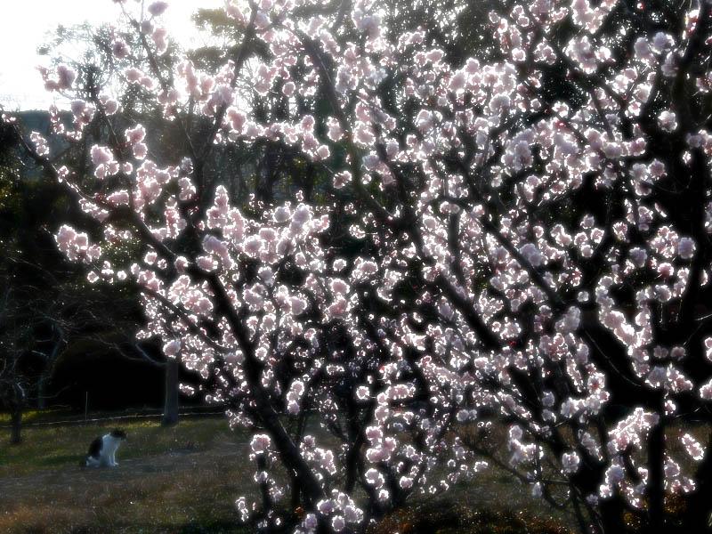 080309花の国梅だけ3