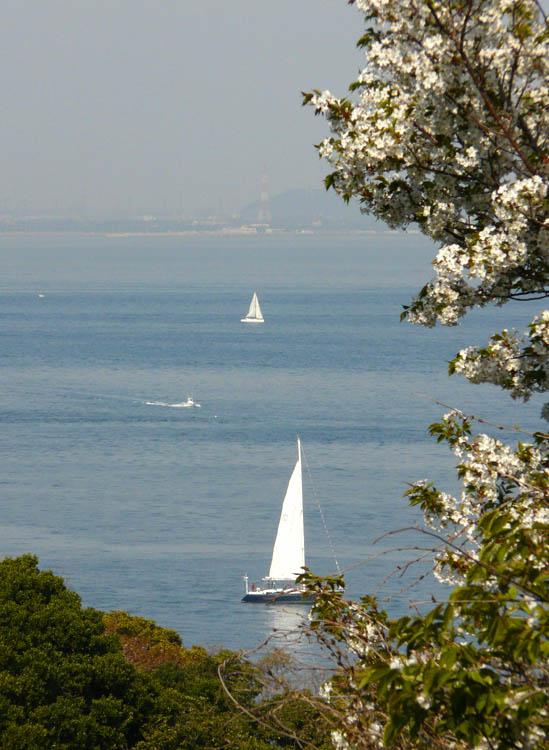 080406海と桜5
