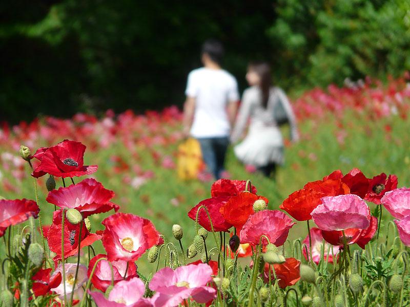 080506花の国1