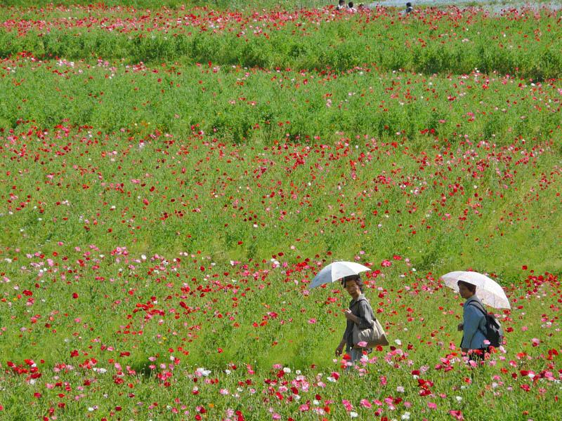 080506花の国2