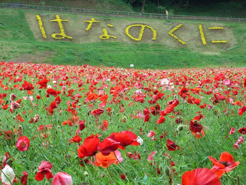080511花の国1