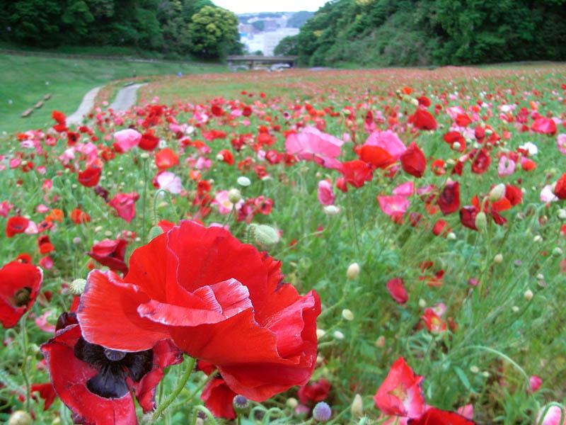 080511花の国2