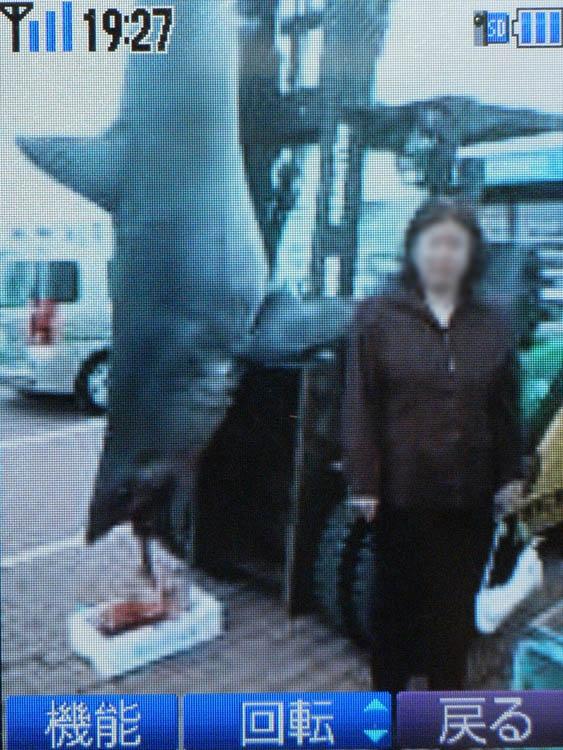 長井のサメ