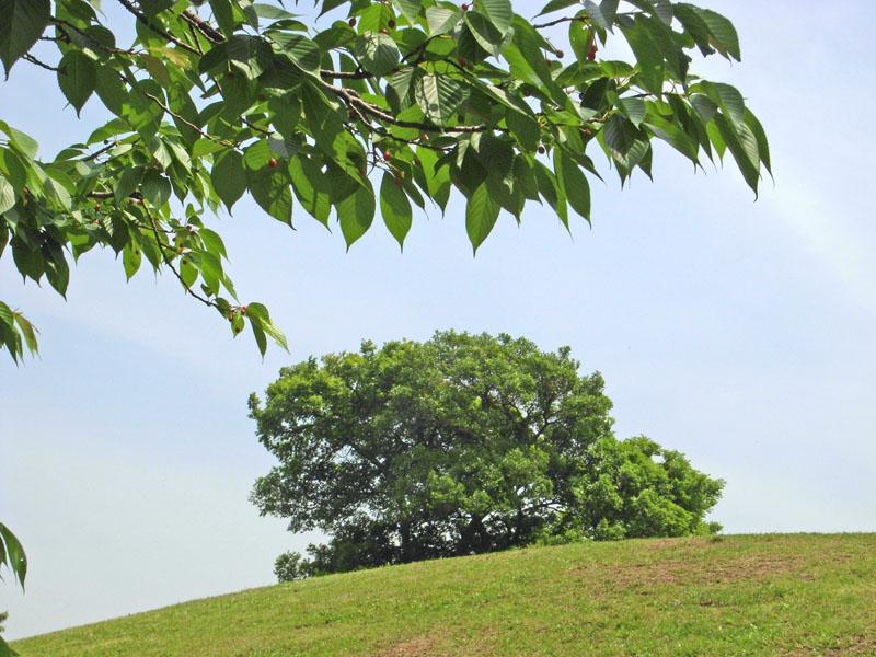 080515榎の丘とサクランボ1