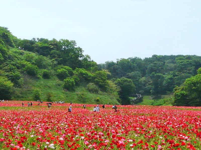 080518花の国1