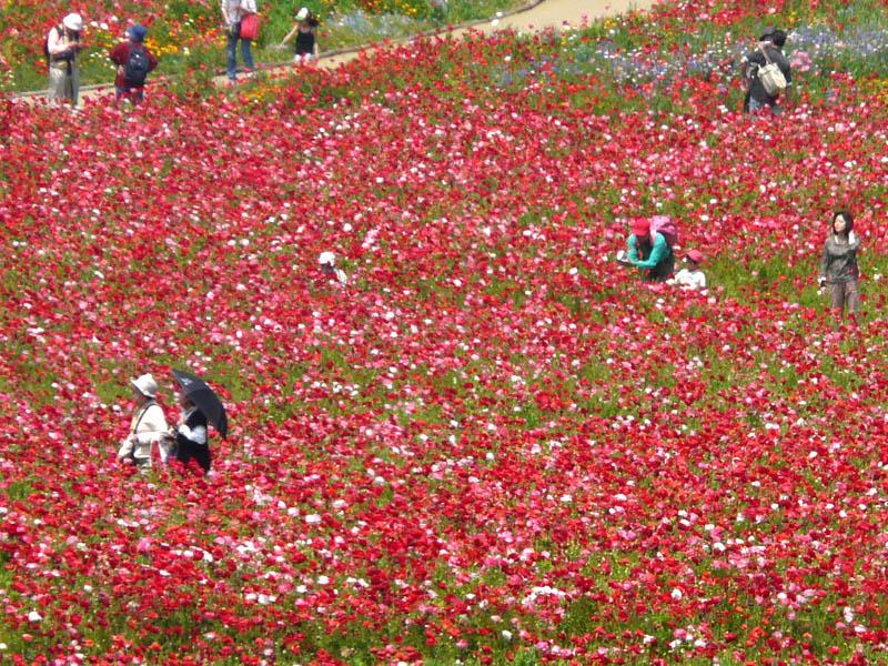 080518花の国2