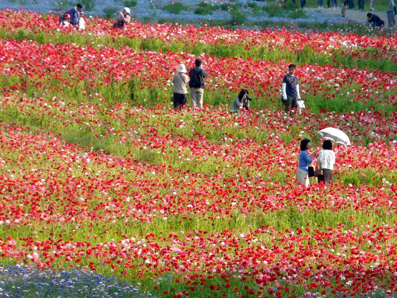 080518花の国3