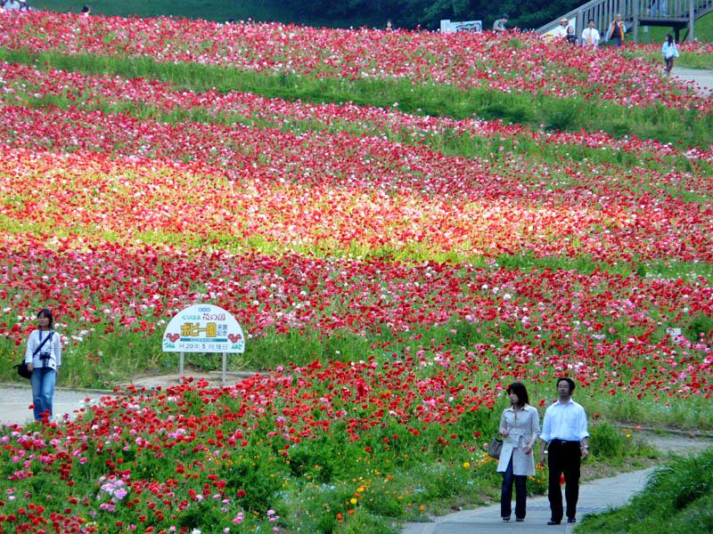 080518花の国4