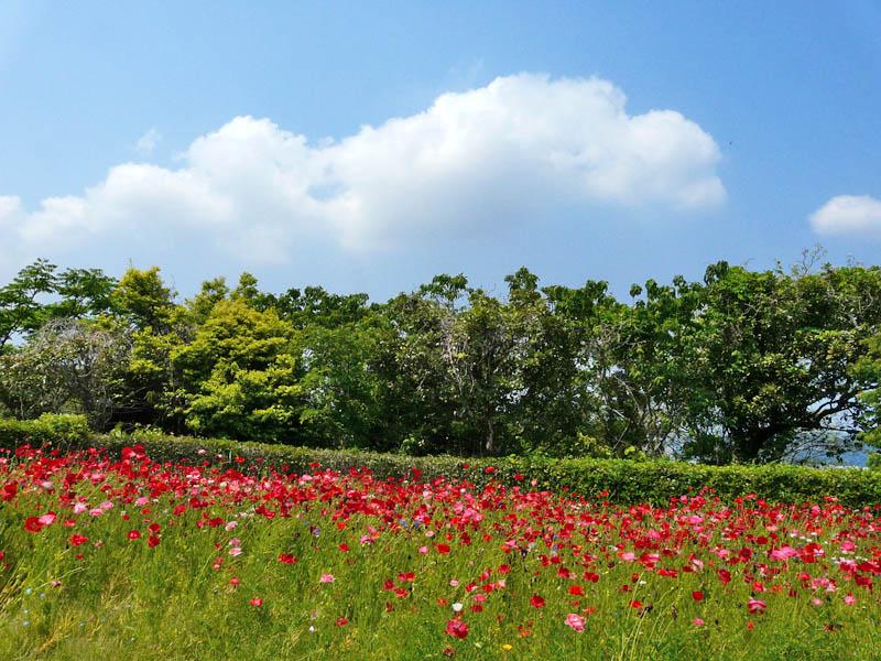 080518花の国5