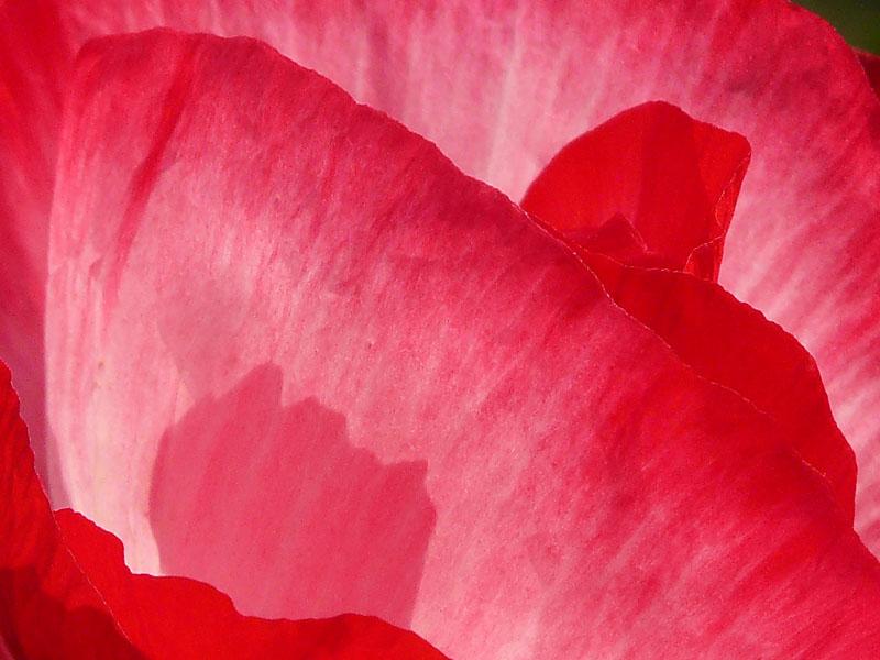 080522紅い花2